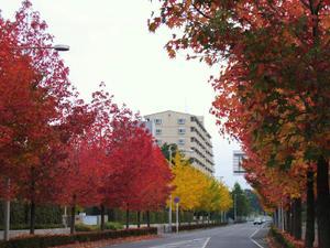 20081120_4